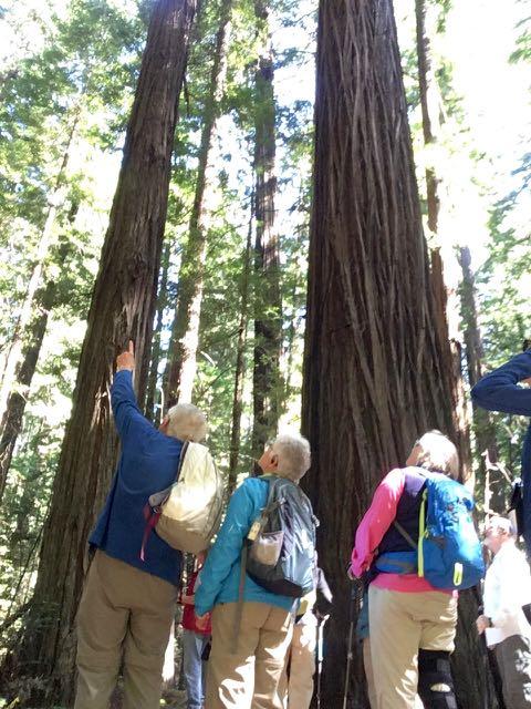 2018 06 03 Redwoods 21