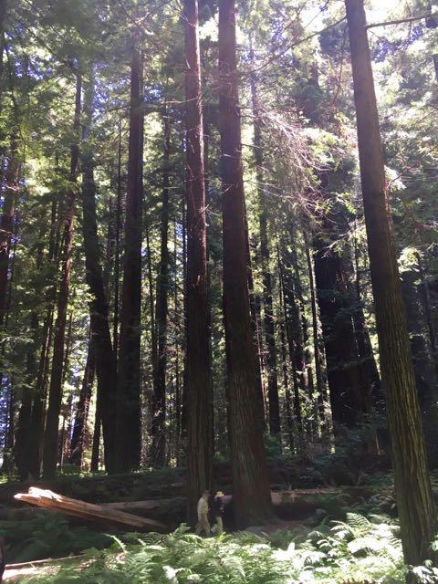 2018 06 03 Redwoods 23