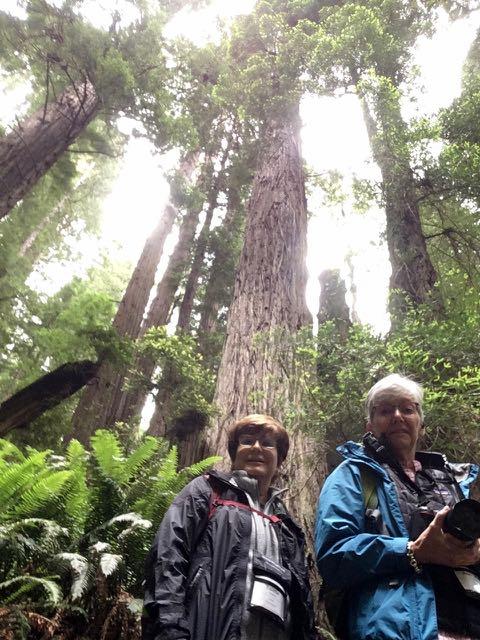 2018 06 03 Redwoods 232