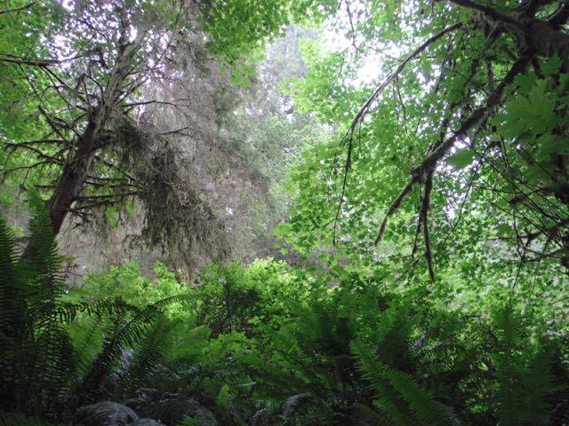 2018 06 03 Redwoods 239
