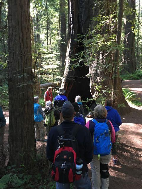 2018 06 03 Redwoods 24
