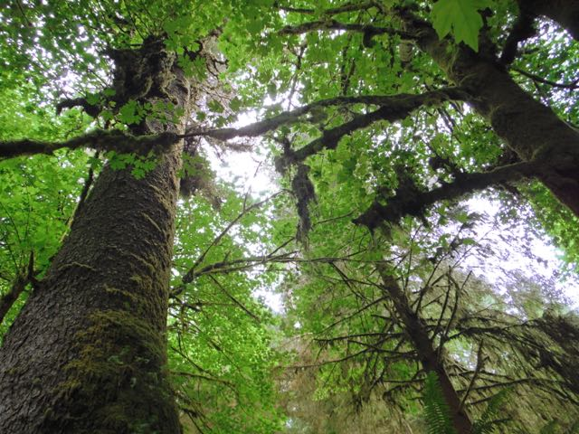 2018 06 03 Redwoods 243
