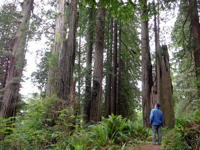 2018 06 03 Redwoods 246