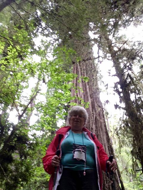 2018 06 03 Redwoods 247