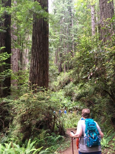2018 06 03 Redwoods 248