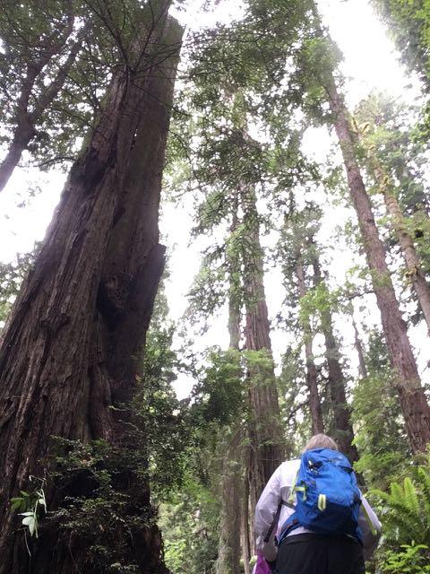 2018 06 03 Redwoods 249
