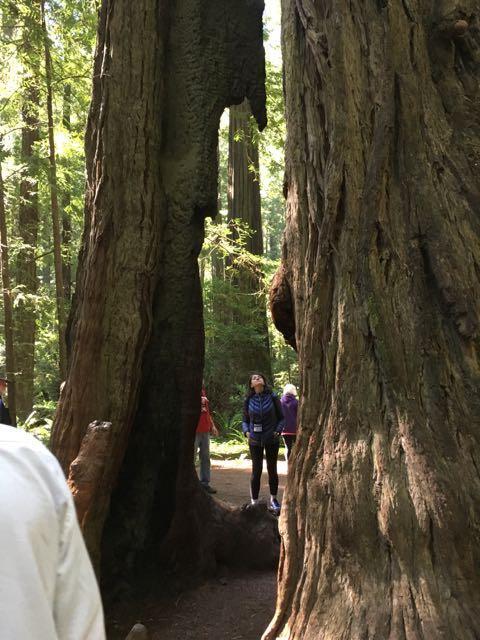 2018 06 03 Redwoods 25