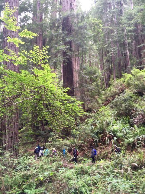 2018 06 03 Redwoods 250