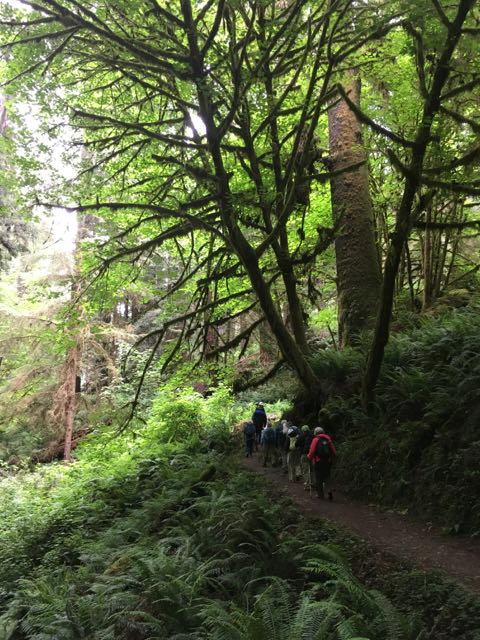 2018 06 03 Redwoods 253