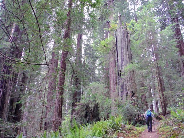 2018 06 03 Redwoods 254