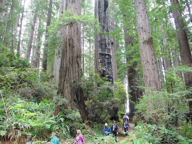 2018 06 03 Redwoods 255