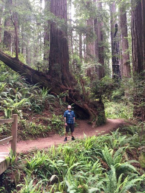 2018 06 03 Redwoods 258
