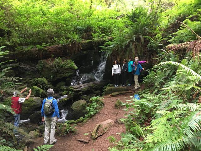 2018 06 03 Redwoods 261