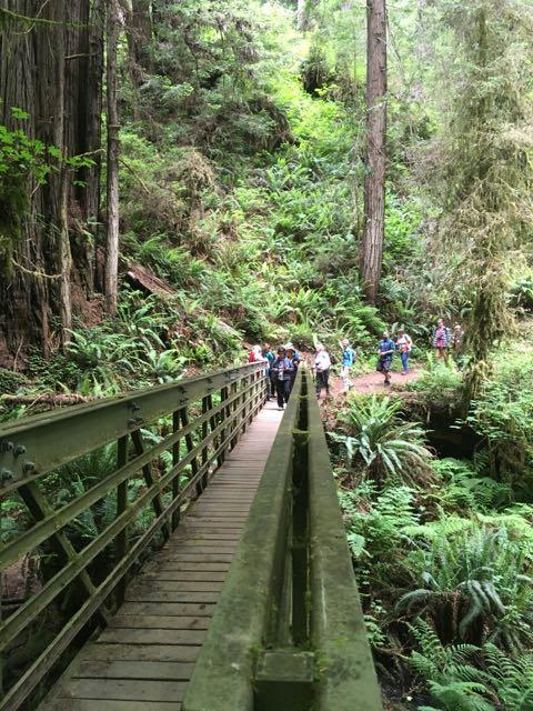 2018 06 03 Redwoods 262