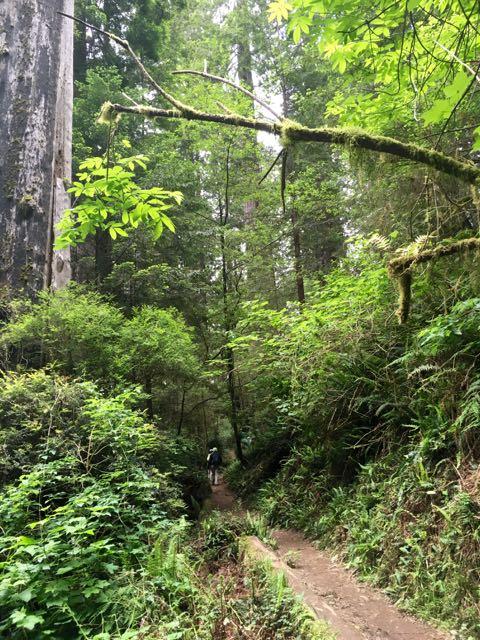 2018 06 03 Redwoods 263