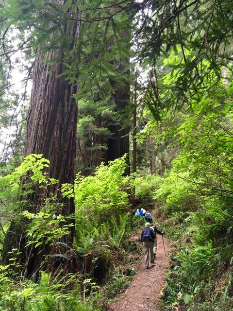 2018 06 03 Redwoods 264