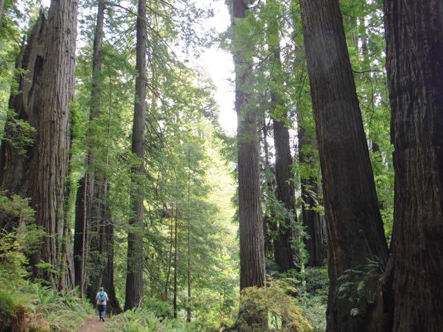 2018 06 03 Redwoods 271