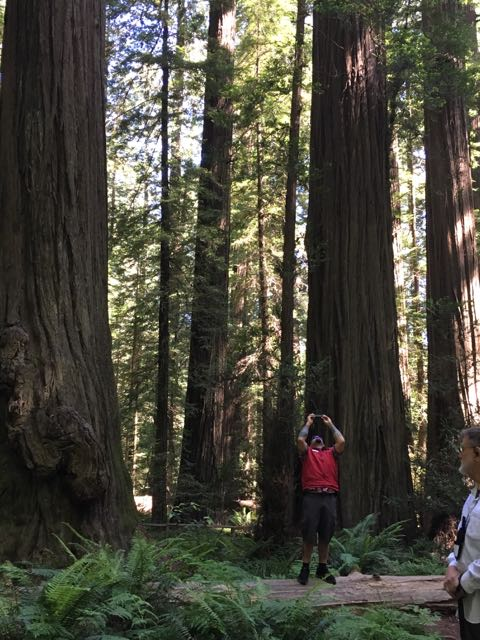 2018 06 03 Redwoods 28