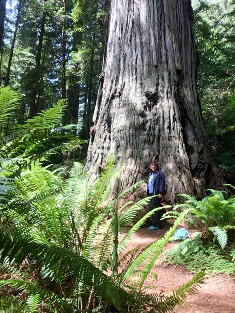2018 06 03 Redwoods 282