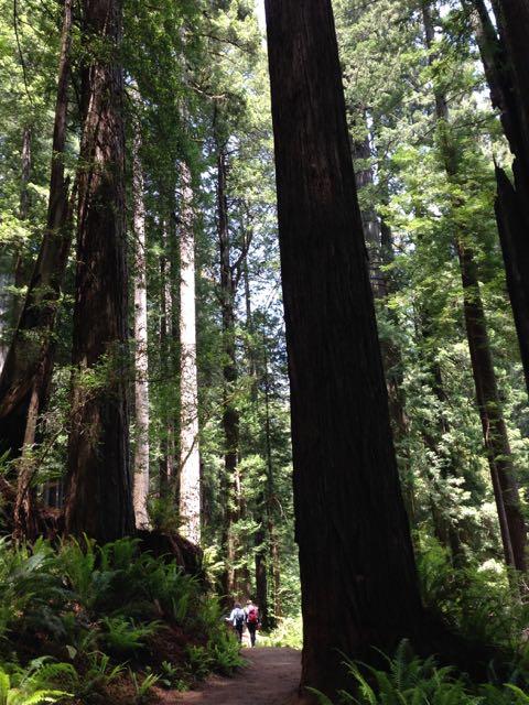 2018 06 03 Redwoods 284