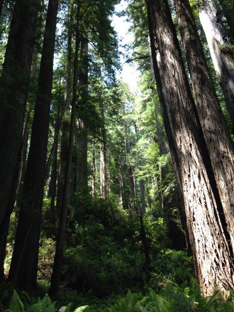 2018 06 03 Redwoods 285