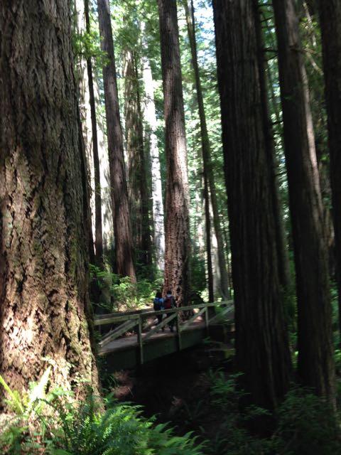 2018 06 03 Redwoods 286