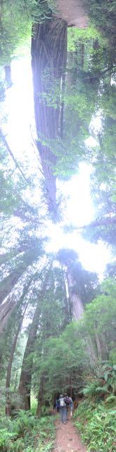 2018 06 03 Redwoods 291
