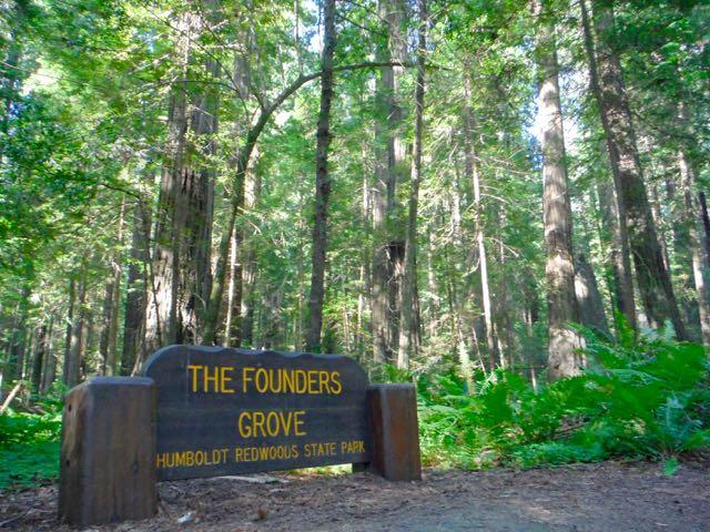 2018 06 03 Redwoods 3