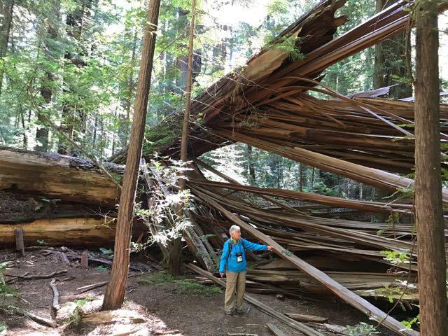 2018 06 03 Redwoods 30