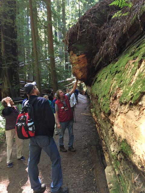 2018 06 03 Redwoods 32