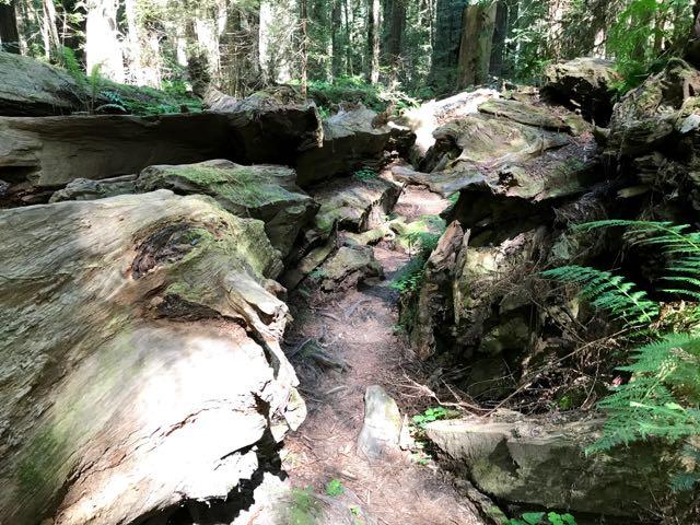2018 06 03 Redwoods 33