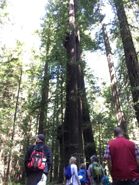 2018 06 03 Redwoods 36
