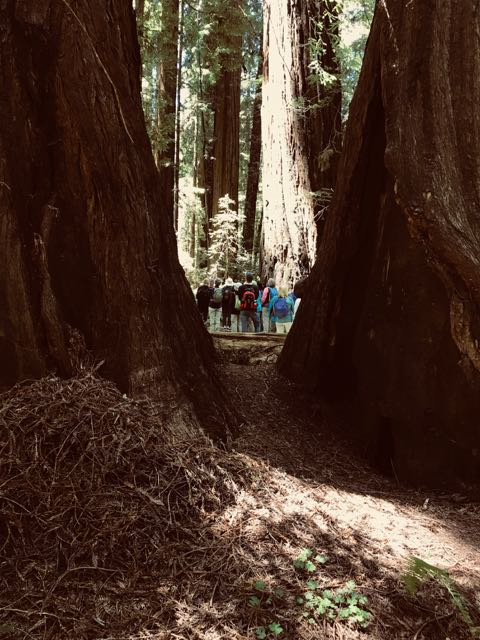 2018 06 03 Redwoods 38