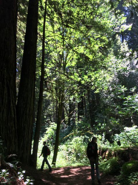 2018 06 03 Redwoods 39
