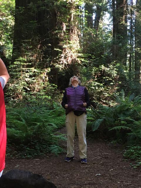 2018 06 03 Redwoods 4