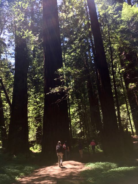 2018 06 03 Redwoods 40