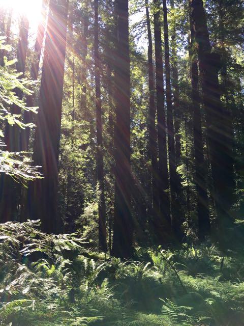 2018 06 03 Redwoods 42