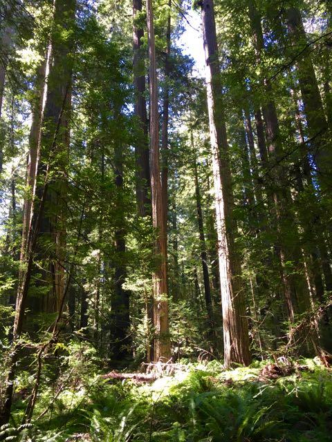 2018 06 03 Redwoods 43