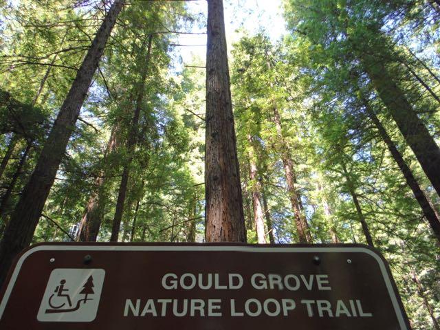 2018 06 03 Redwoods 47