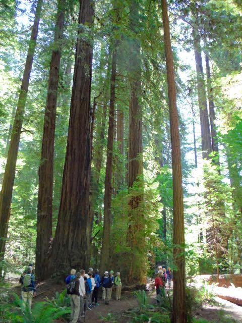 2018 06 03 Redwoods 52