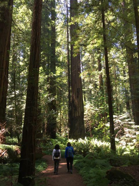 2018 06 03 Redwoods 57