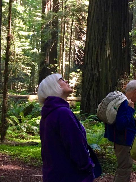 2018 06 03 Redwoods 6