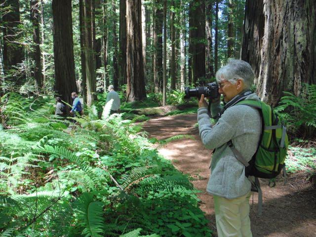 2018 06 03 Redwoods 60