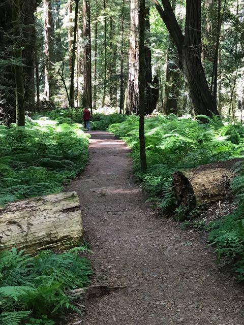 2018 06 03 Redwoods 62