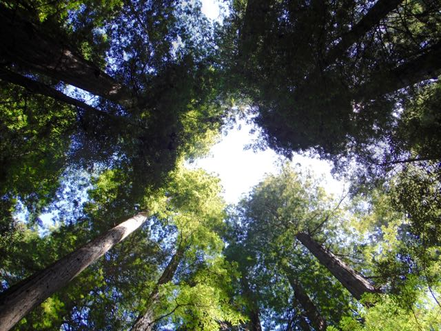 2018 06 03 Redwoods 7