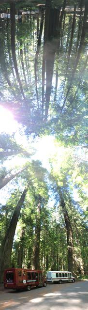 2018 06 03 Redwoods 85