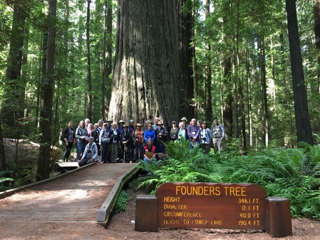 2018 06 14 Redwoods 1