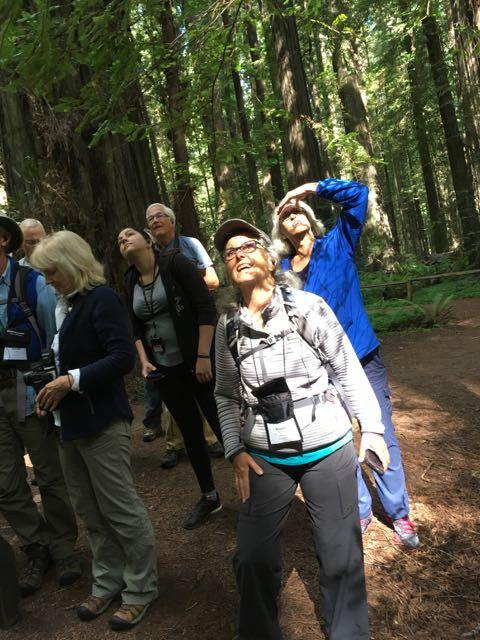 2018 06 14 Redwoods 10