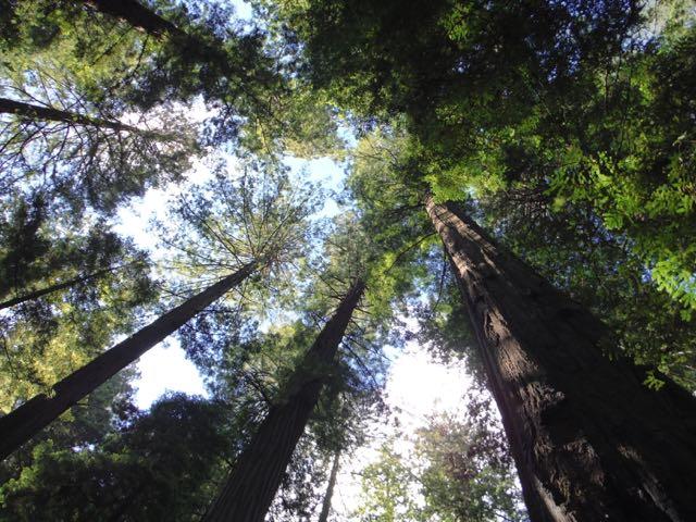 2018 06 14 Redwoods 11