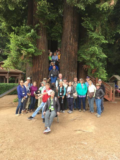 2018 06 14 Redwoods 133